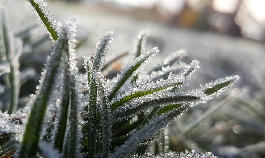 6 Landscaping Tips for Winter